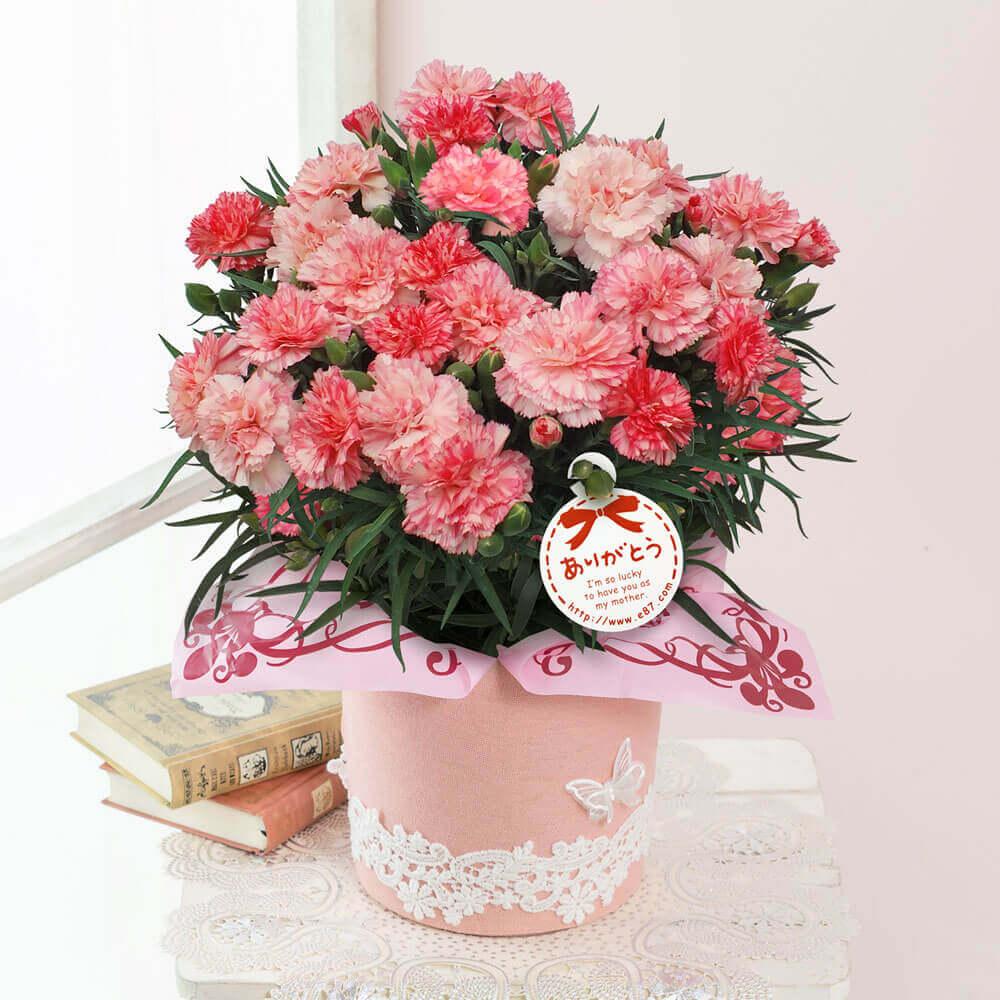 母の日 花 ギフト 鉢植え「カーネーション アンサンブル」