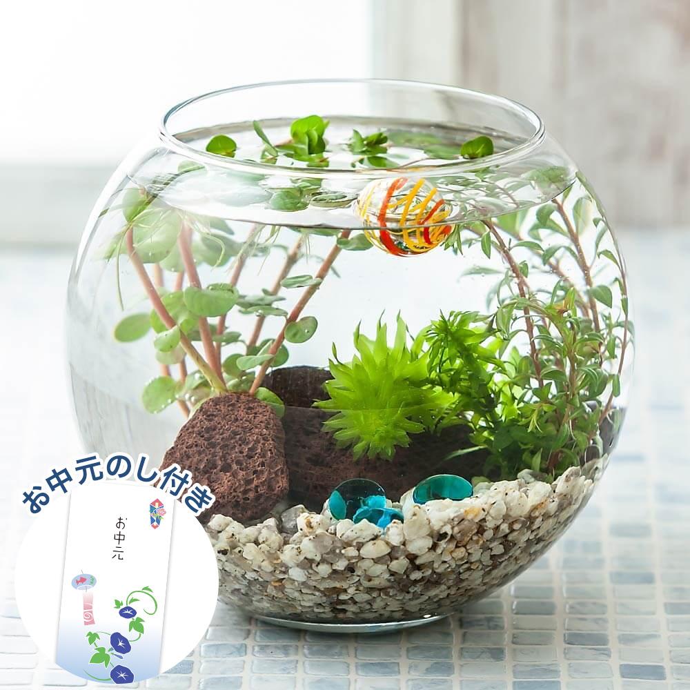 お中元 鉢植え「アクアリウムキット 癒しの水中庭園」