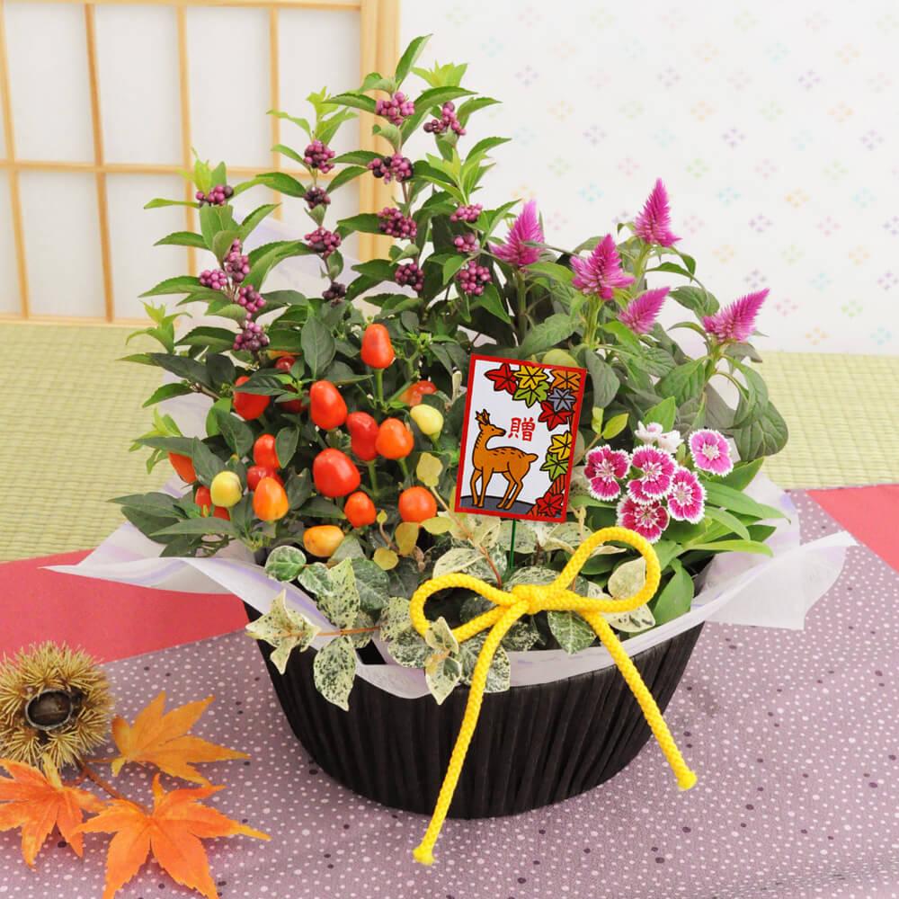 寄せ鉢「秋の風」