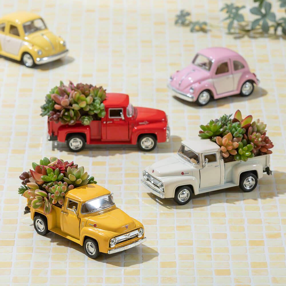 観葉植物「ビンテージトラック」