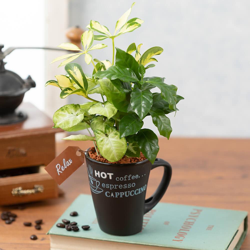 寄せ植え「コーヒーブレイク」
