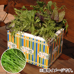 栽培キット「おうち畑〜水菜〜」