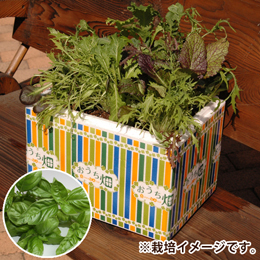 栽培キット「おうち畑〜バジル〜」