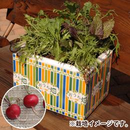 栽培キット「おうち畑〜ラディッシュ〜」