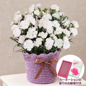 鉢植え「お母さんを偲ぶ白いカーネーション〜母の日限定お線香付き〜」