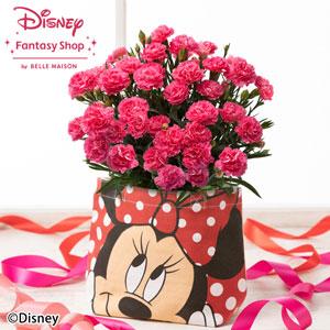 母の日 ディズニー 鉢植え「カーネーション クレア/ミニーマウス」
