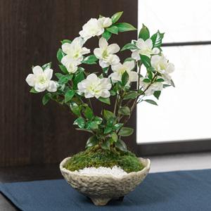 父の日 盆栽「くちなし〜癒しの天然アロマ〜」