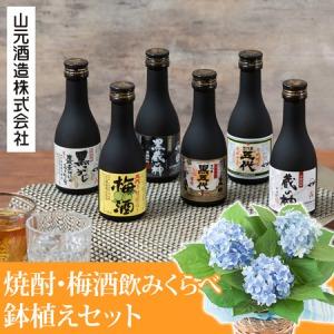 父の日 アジサイ鉢植えセット「山元酒造 焼酎・梅酒飲み比べセット」