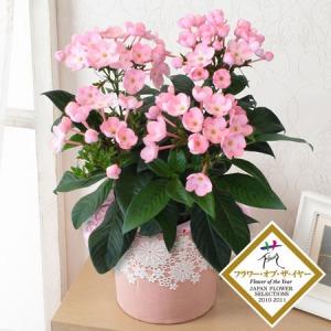 敬老の日 鉢植え「天然アロマの贈り物 におい桜 ココ」
