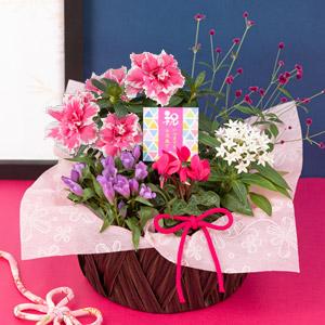 敬老の日 寄せ鉢「秋の贈り物〜華MIYABI〜」