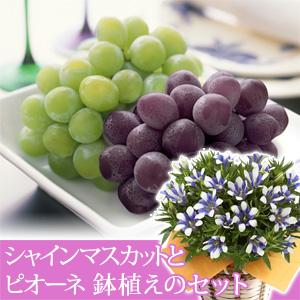 敬老の日 鉢植えセット「季節の果物 シャインマスカットとピオーネ」