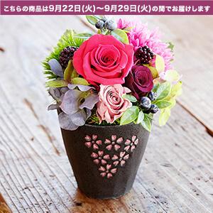 敬老の日 プリザーブドフラワー「桜撫子」