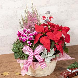寄せ鉢「サンタからの贈り物」