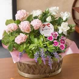 母の日 寄せ鉢「麗しの香り」