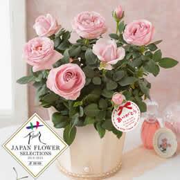母の日 鉢植え「バラ プリンセス オブ インフィニティー」