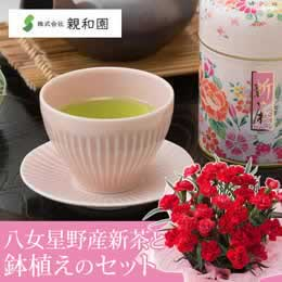 母の日 鉢植えセット「親和園 八女星野産新茶」
