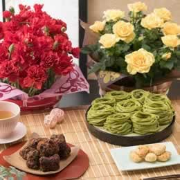 母の日父の日鉢植えセット「浅草むぎとろ とろりんとう・茶そば」