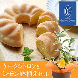 父の日 レモン鉢植えセット「パティスリーグレゴリー・コレ ケークシトロン(レモンケーキ)」