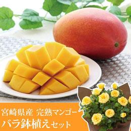 父の日 鉢植えセット「宮崎県産 完熟マンゴー」