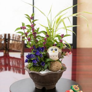 敬老の日 盆栽「ふくろうの庭〜健康と長寿を願う〜」