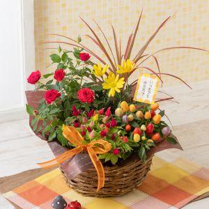敬老の日 寄せ鉢「秋のカラフル・パレット」