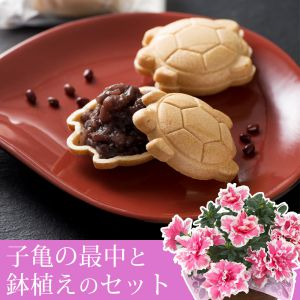 敬老の日 鉢植えセット「夢・菓子工房 かめまん 子亀の最中」