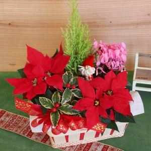 寄せ鉢「クリスマス・ガーデン」