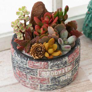 寄せ植え「ロックガーデン 紅葉を楽しむ多肉植物」