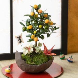 お正月 盆栽「富貴の樹〜金豆(きんず)〜」