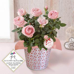 母の日 鉢植え「バラ プリンセス オブ インフィニティ」