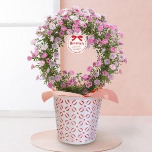 母の日 鉢植え「可憐なピンクのツルバラリース」