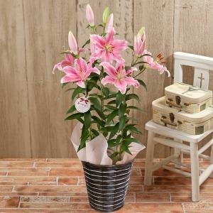 母の日 鉢植え「オリエンタルリリー ソルボンヌ〜甘い香りに包まれて〜」