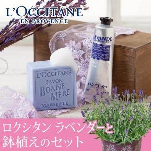母の日 鉢植えセット「ロクシタン ラベンダー ハンドクリーム&ソープ」