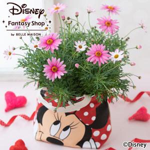 母の日 ディズニー 鉢植え「マーガレット さくらべーる/ミニーマウス」