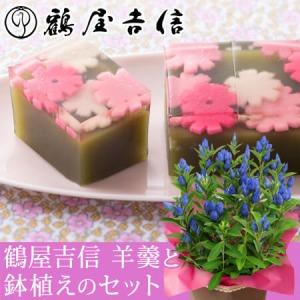 敬老の日 鉢植えセット「鶴屋吉信 秋桜の小径」