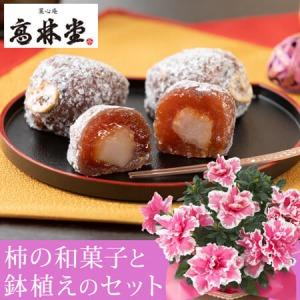敬老の日 鉢植えセット「��林堂 長寿柿」