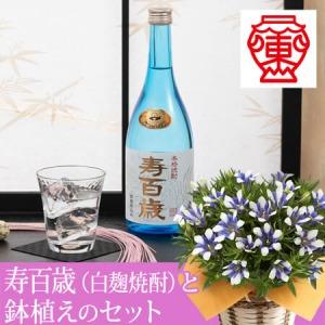 敬老の日 白寿セット「東酒造 寿百歳(白麹)」