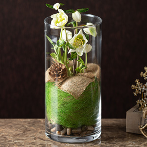 鉢植え「Helleborus in Glass」