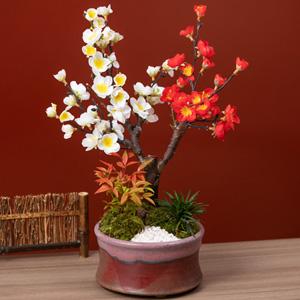 お正月 盆栽「紅白の美〜紅白梅咲き分け〜」