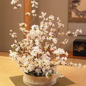 お正月 みちのく初桜 〜啓翁桜〜元日届けM