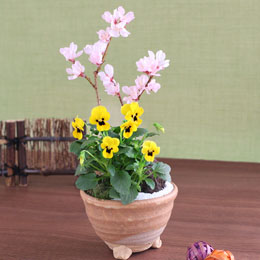 EX盆栽「富士に春を告げる富士桜」
