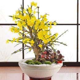 盆栽「迎春花〜鮮やかな黄色の春の使者〜」