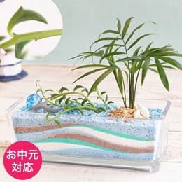 お中元 観葉植物「ドルフィン カーニバル」