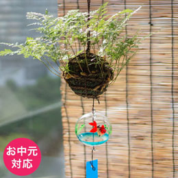 お中元 観葉植物「風鈴しのぶ〜涼やかな夏の音〜」