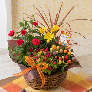 EX寄せ鉢「秋のカラフル・パレット」