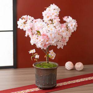 鉢植え「京のかおり〜南殿桜〜」