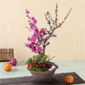 盆栽「紅白の美〜紅白梅咲き分け〜」