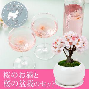 盆栽セット「やたがらす 北岡本店 さくらKIRAKIRA」