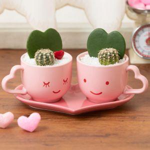 EX観葉植物「LOVER'S Valentine」