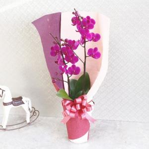 鉢植え「花束みたいな胡蝶蘭」